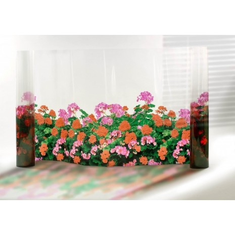 Film décoratif Fleurs Géraniums