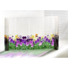 Film décoratif Fleurs Pensées
